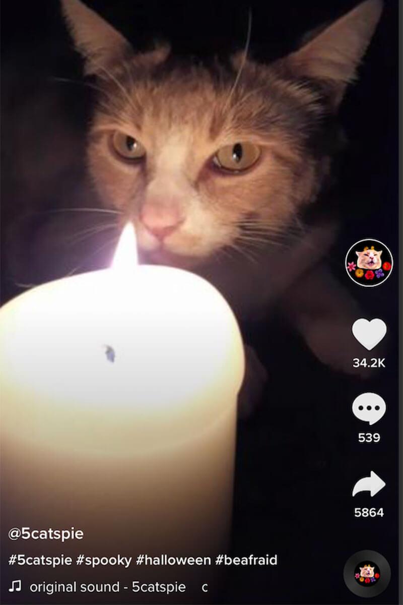 tiktok-account-five-cats-pie