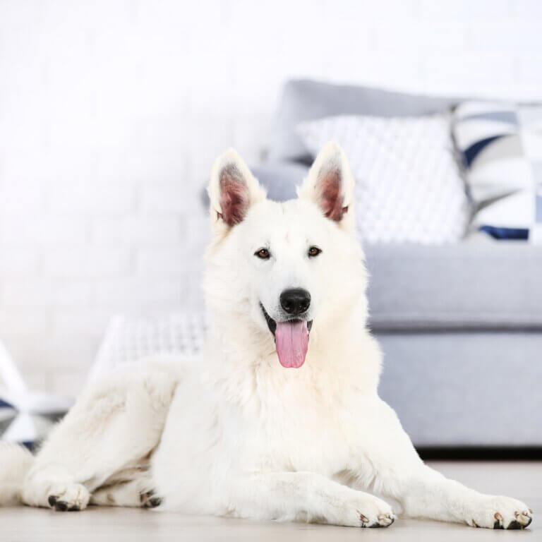 Keeping your dog off the couch with jennifer berg