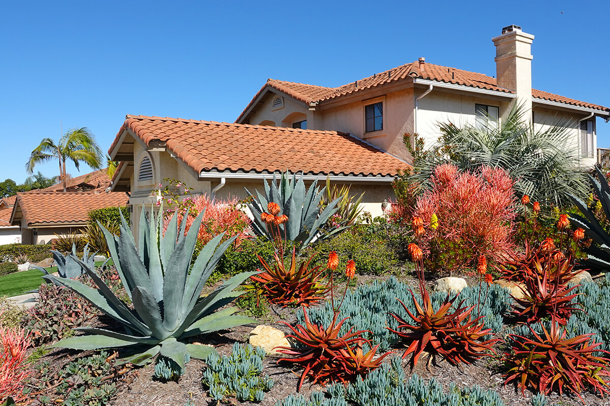 Colourful, sustainably xeriscaped yard in front of a house.