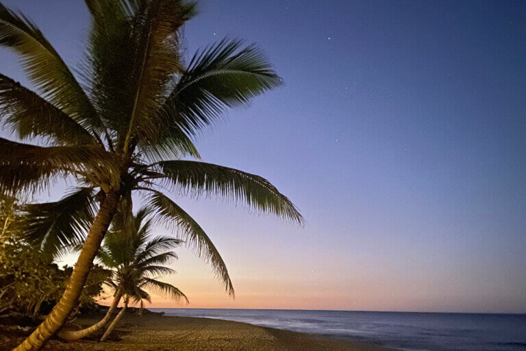 palm tree on a beach at sunset