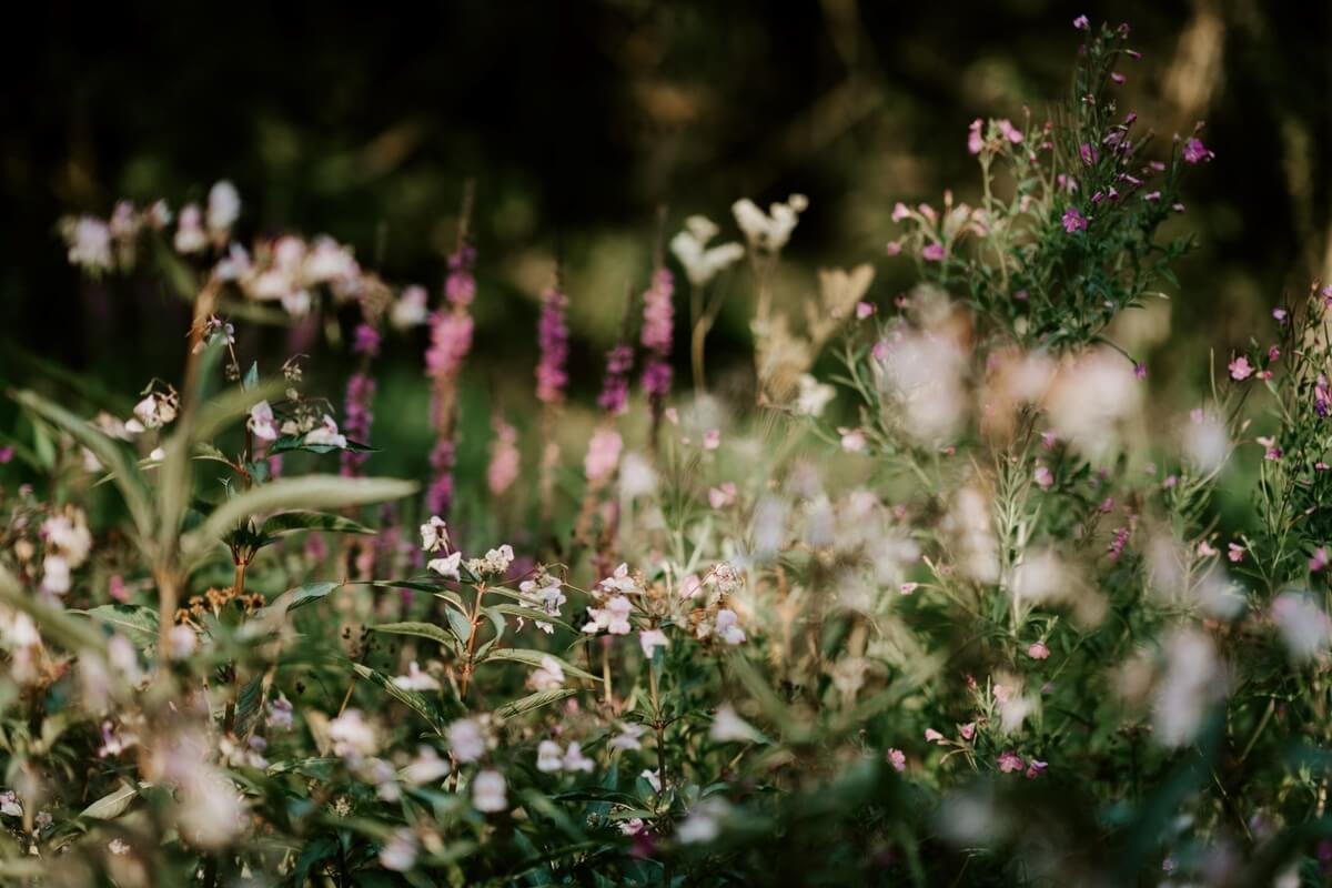 Multi-coloured wildflowers in a garden