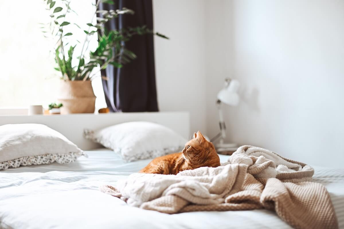orange cat relaxing on a bed, 4 simple ways to get better sleep tonight