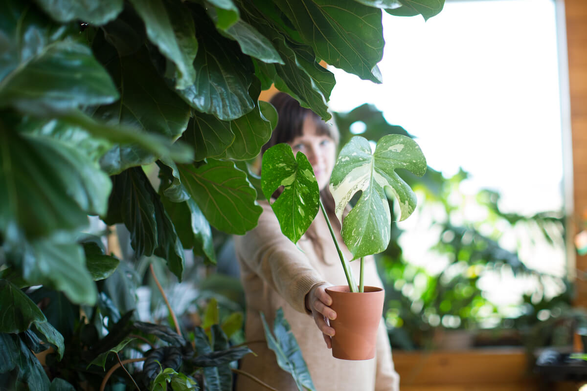woman standing behind amazing houseplants