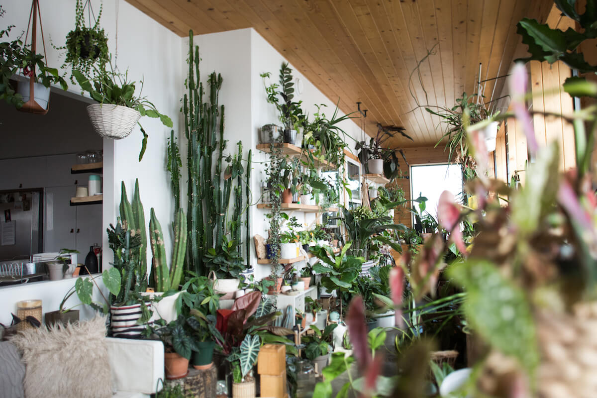 a room with shelves full of amazing houseplants