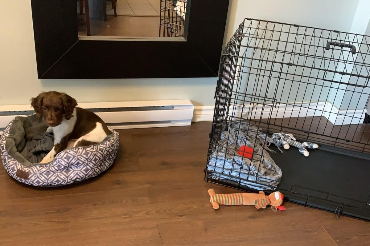 brown & white puppy laying on its bed with crate nearby, puppy proofing your home