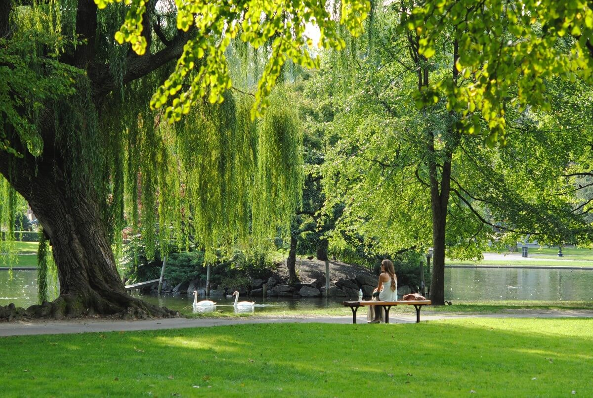 girl sitting at park bench near swimming swans