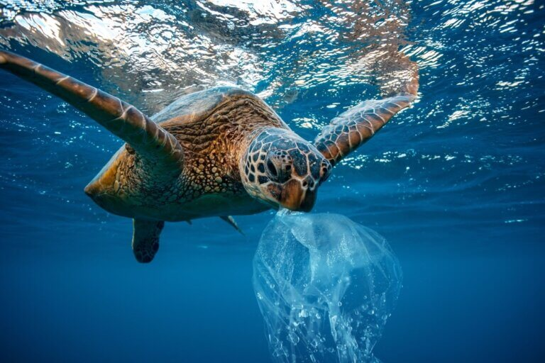 a swimming turtle with plastic in its mouth, save the oceans