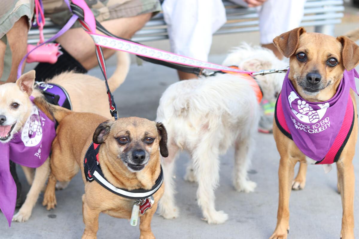 4 small dogs in the Texas SOCA Strutt Your Mutt event
