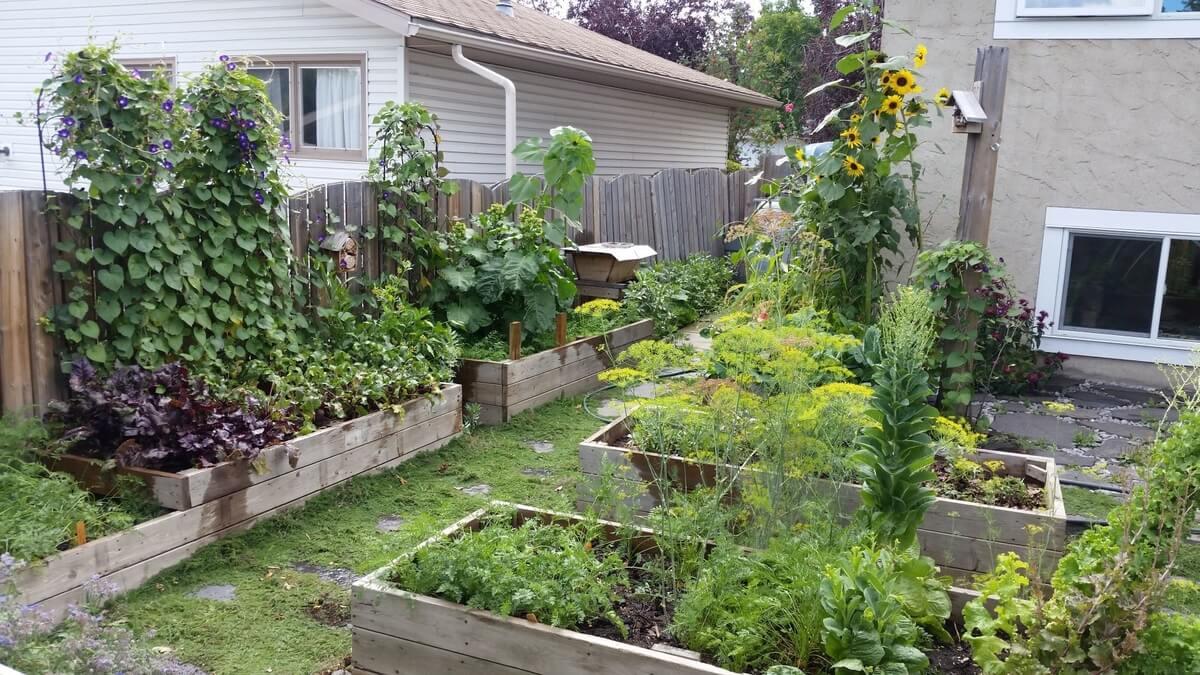 mature backyard garden with various grown plants