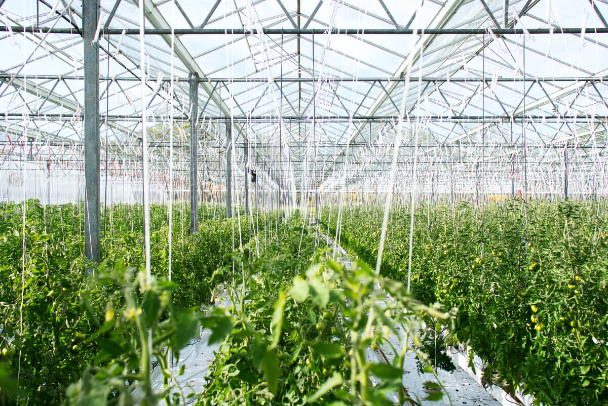 massive indoor vegetable gardening supported by virtual cultivator event