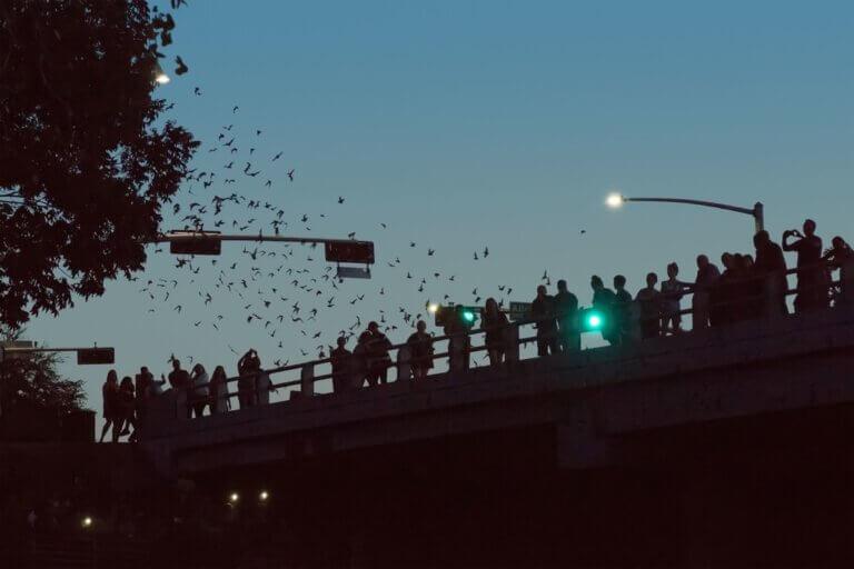 bats flying over bridge at annual bat fest in austin
