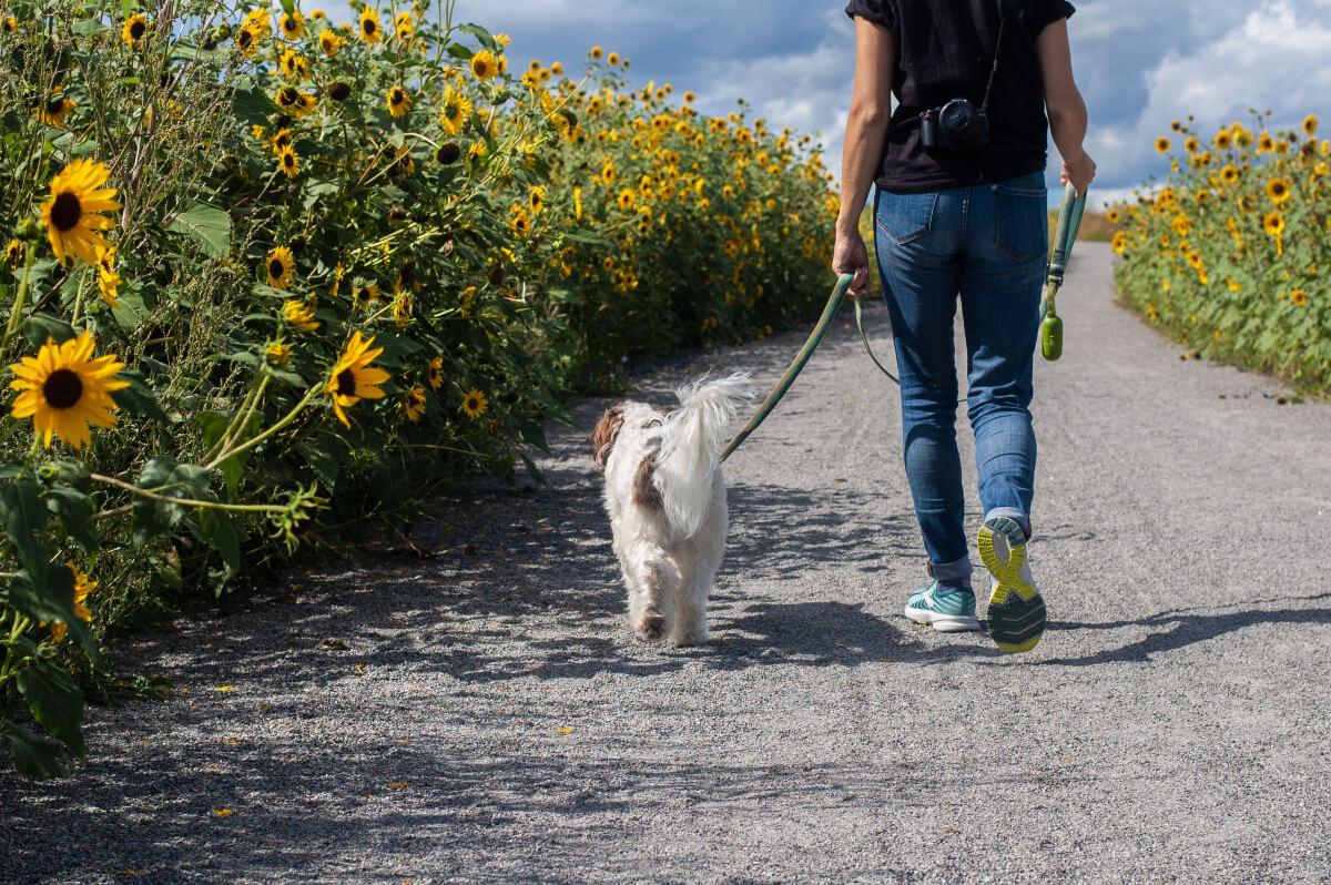 person walking dog in dog park alternatives