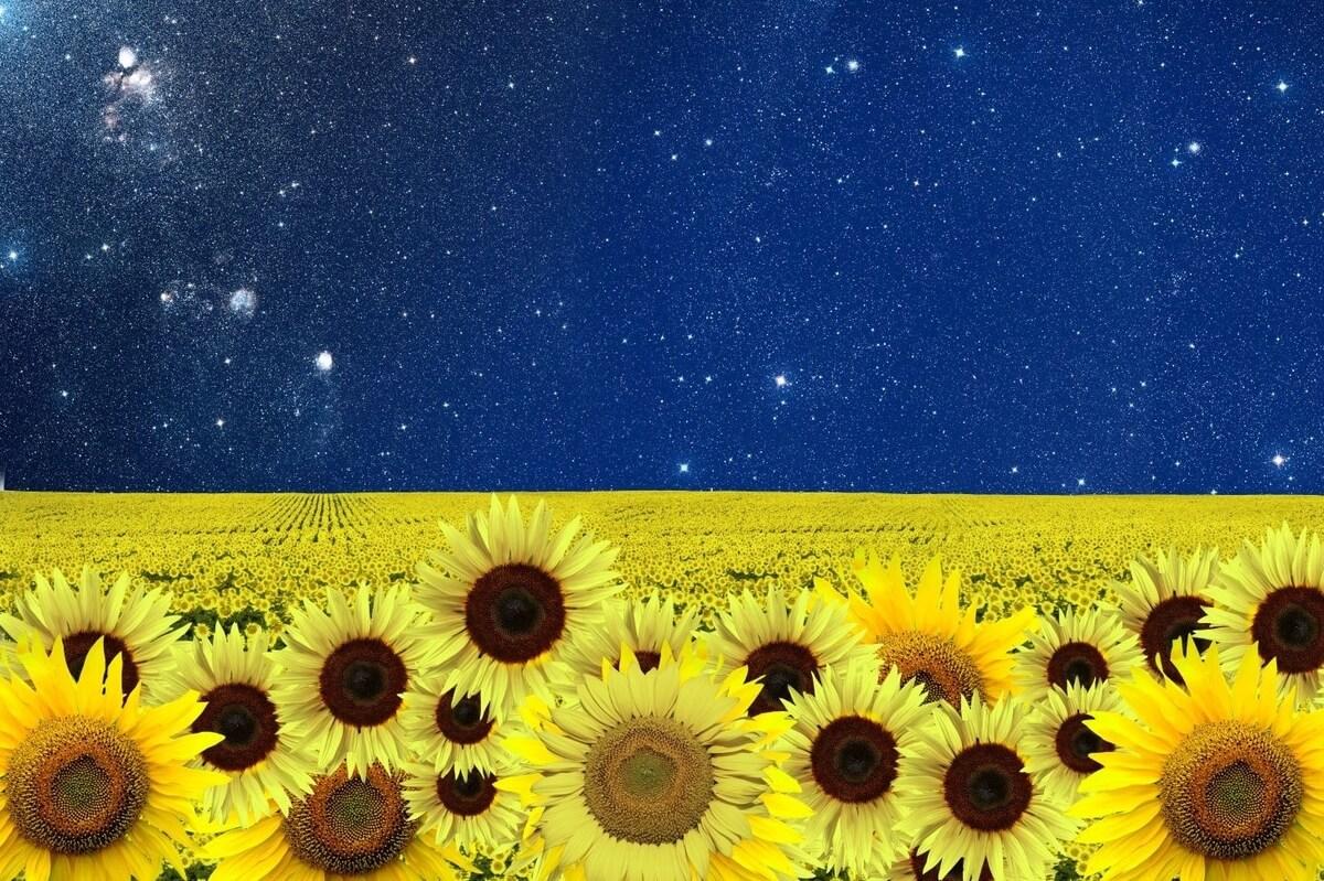 sunflowers and blue night sky at van gogh exhibit toronto