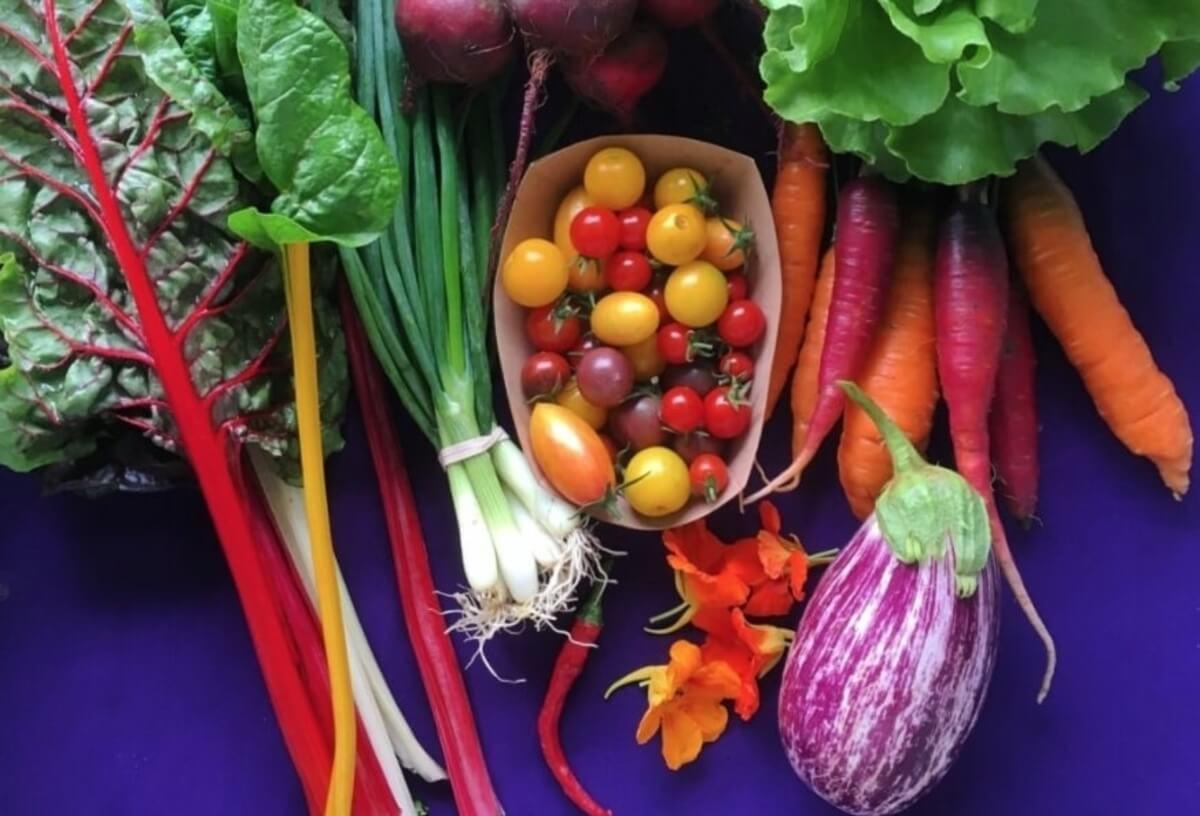 Colorful, fresh vegetables