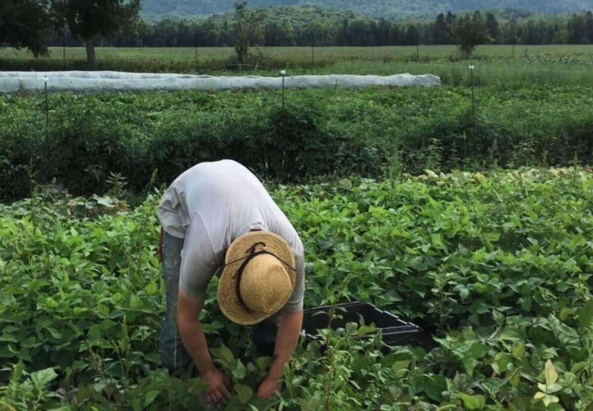 A person tending to a garden