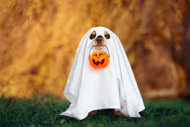 Dog in a ghost Halloween costume